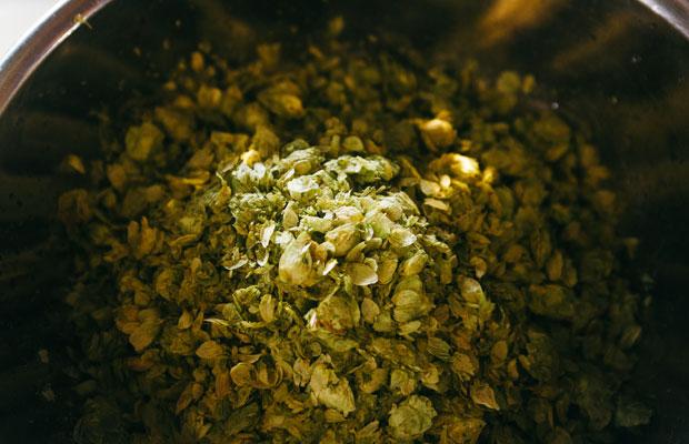 ビールづくりの原料として欠かせないホップ。醸造所内に豊かな香りが漂う。