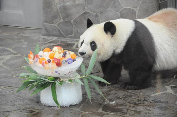 ジャイアントパンダのタンタン。去年の誕生日も素敵なケーキでお祝い!