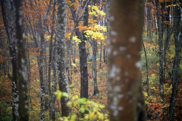 森でのフィールドワークの様子
