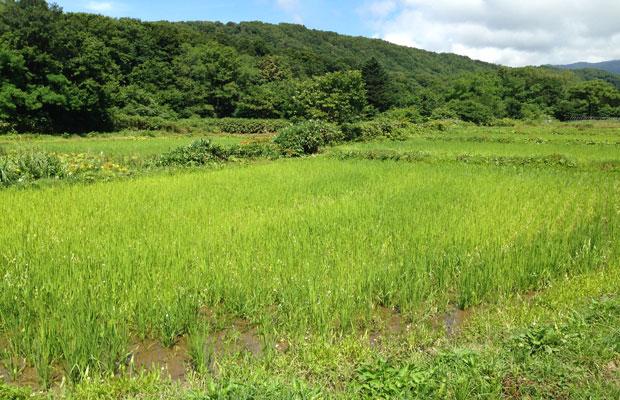 〈秀明ナチュラルファーム北海道〉を運営する富樫さん。無肥料・無農薬の自然農法で主に米と大豆をつくっている。味噌、醤油、豆腐、納豆などの毎日の食卓に欠かせない加工品にも力を入れている。