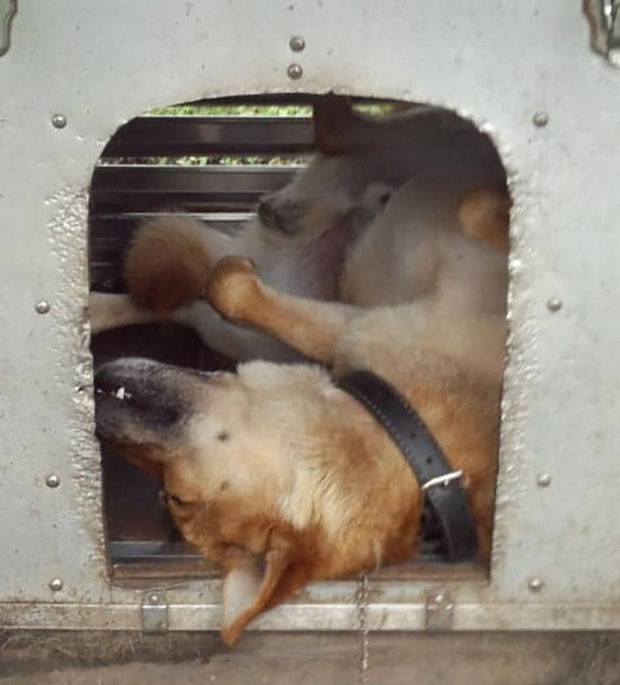 愛犬・マックくん画像