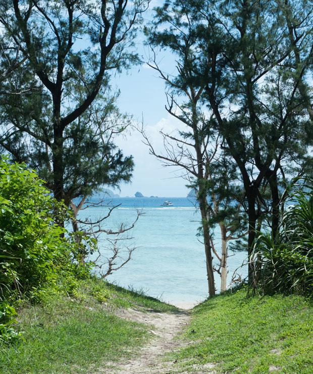 島の東の端にあるトウマ浜へ。木々の先に広がる海。