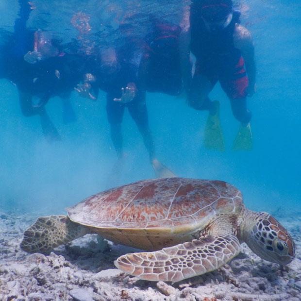阿真ビーチで出会ったウミガメ。ウミガメと一緒に泳げるなんて!