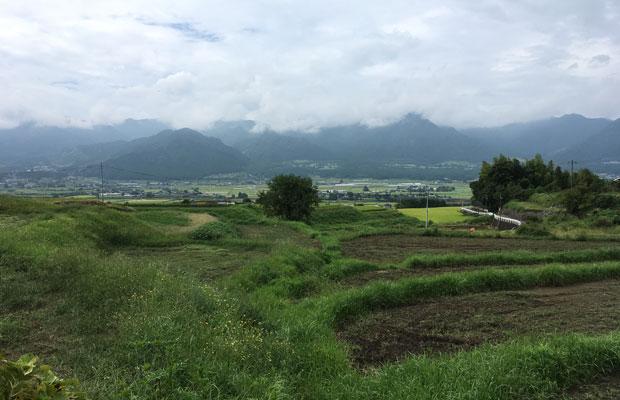 参道からの眺め。稲が植えられていない水田が見えます。