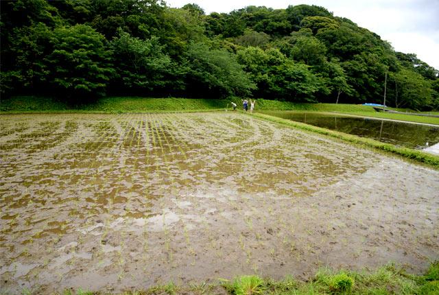 我が家の田んぼでの田植えの様子