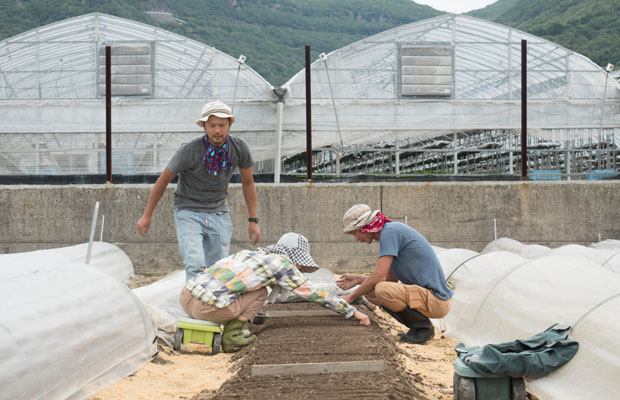 今年から新しく借りた畑。にんじん、玉ねぎ、キャベツなど育てています。