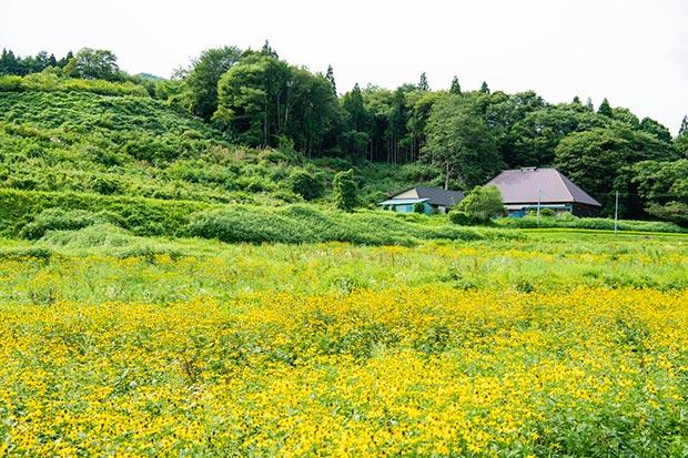 京津畑の風景。