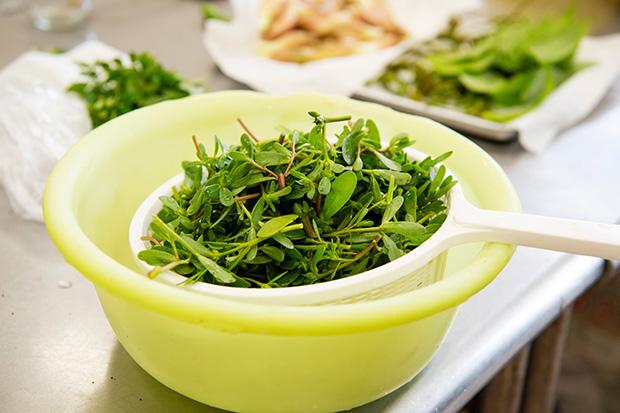 オメガ3脂肪酸が多く含まれるスベリヒユ。トルコ、ギリシャなどでもよく食べられる野草なのだとか。