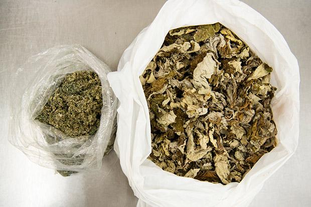 工房で時々つくられる草もちの元祖「ごんぼっぱもち」は、オヤマボクチという植物の葉を乾燥させて混ぜ込んだもの。シナミ(弾力)があり、ヨモギよりも野趣あふれる香りのもちになる。写真はオヤマボクチの葉。