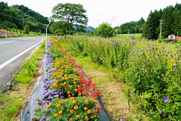 京津畑を車で走れば、あちらこちらで見かける色とりどりの花々。この地で暮らす人々の細やかな気配りや、暮らしを豊かにしようという思いが感じられる。