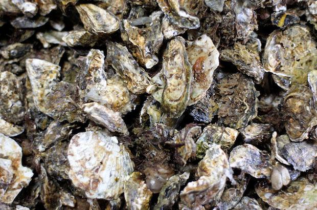 岡山県瀬戸内市尻海産の牡蠣