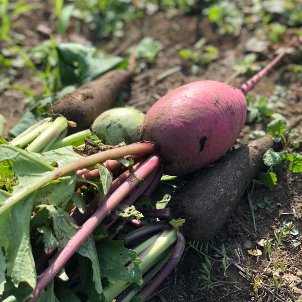 農園で栽培される野菜