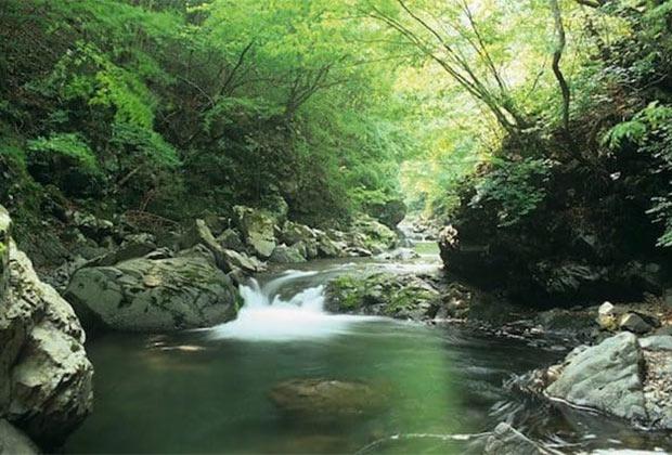 小菅村は、首都圏を流れる多摩川と相模川の源流部にあたる。