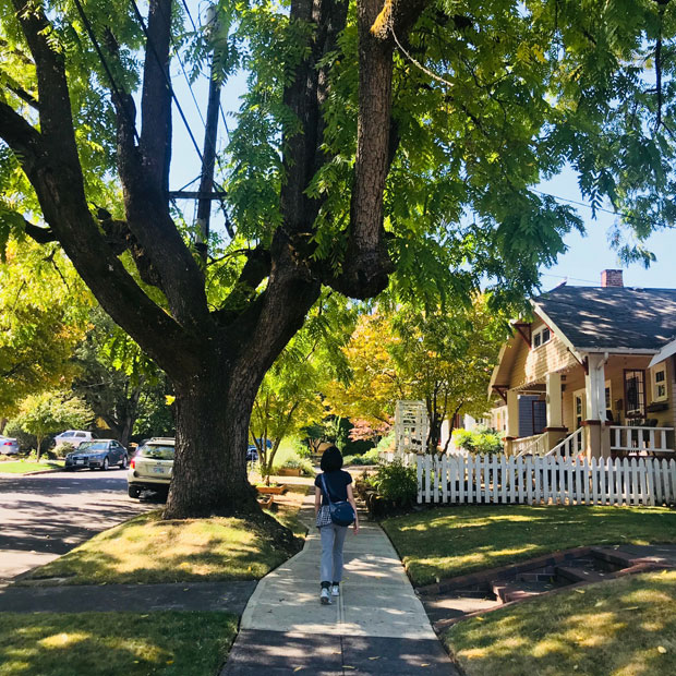 ポートランドでは大きな木をあちこちで見かける。(撮影:山中緑)