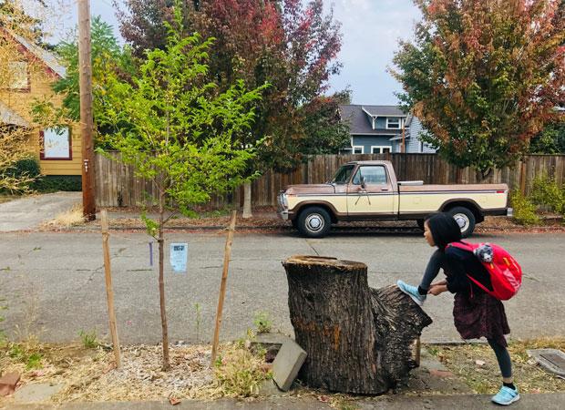 木を切ったら新しい木を植えるというルールがポートランドにはある。(撮影:山中緑)