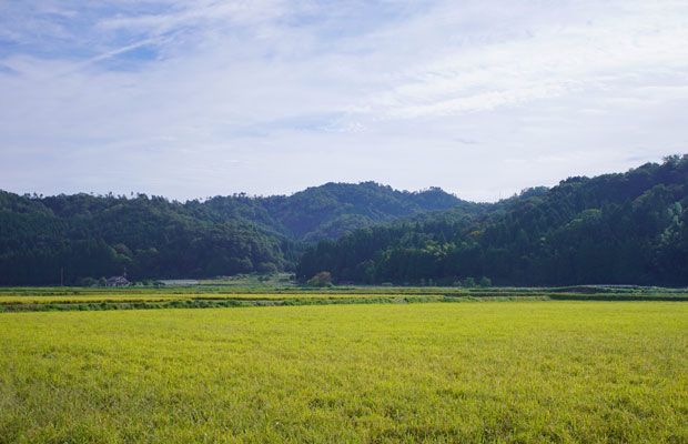 三重森本の田園風景。