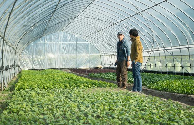 町内に点在している耕作放棄地などの農地をフードハブ・プロジェクトで借りて、〈つなぐ農園〉としてお米、小麦、野菜などを育てています。農業長の白桃薫さんが畑を案内してくれました。