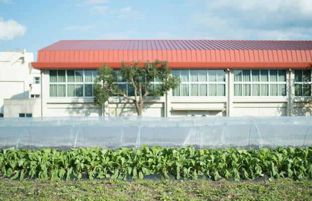 小学校のすぐ横にある畑。
