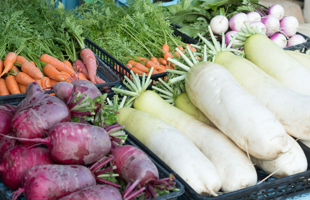 冬の野菜たち。超巨大に育った大根がおいしい。