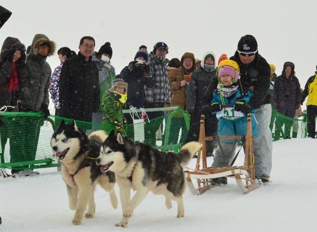 犬ぞりチャレンジ(犬ぞり体験レース)