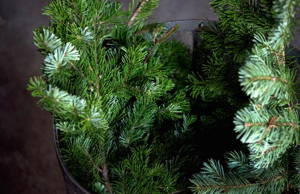 トドマツはもみの木の仲間。部屋に香りが広がると、森の中にいるようなリラックスした気持ちになれる。田邊さんはこの香りが大好きだそうで、モミエ社長と呼ばれている。