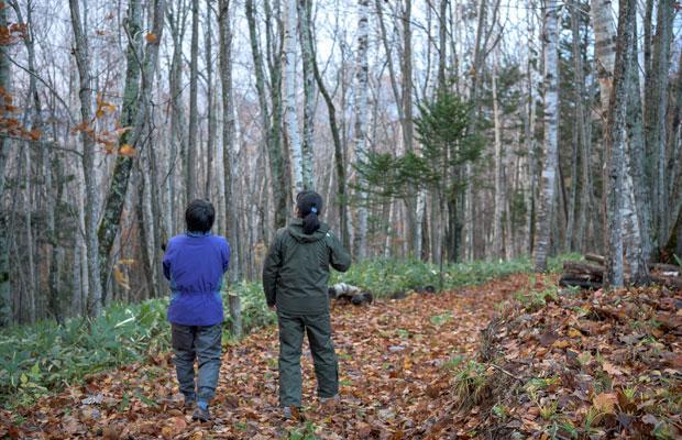 フプの森が購入した山。針葉樹や広葉樹などさまざまな木々がある。
