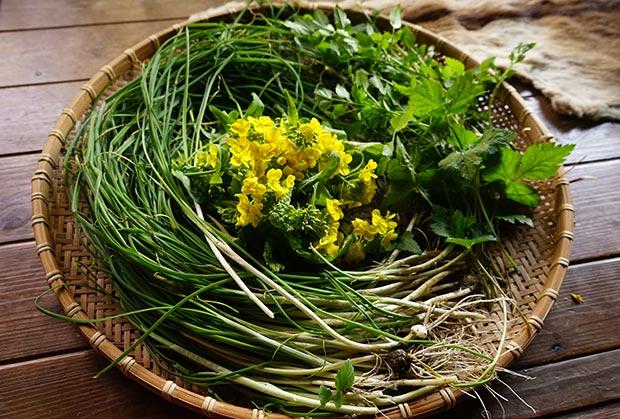 自然の中で育った野蒜、セリ、ミツバ、菜の花。