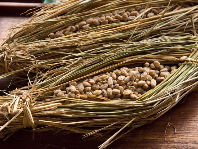 手づくりの納豆