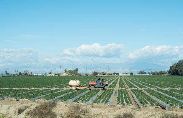 広大な畑。これ全部イチゴ。どうやって収穫するのか謎。小豆島にあるイチゴ農家さんのハウスと比べるともう違う作物なんじゃないかと感じる。