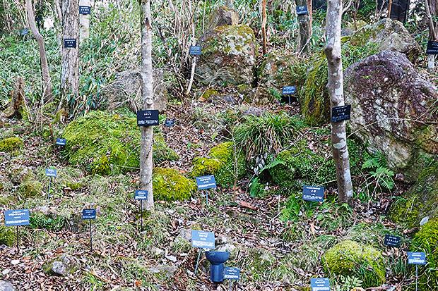 〈リョーマの休日〜自然&体験キャンペーン〜〉で体感!名札の数が尋常じゃない高知「牧野植物園」の植物愛