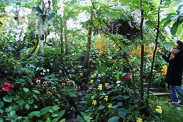 自然に咲く高さで展示される植物たち
