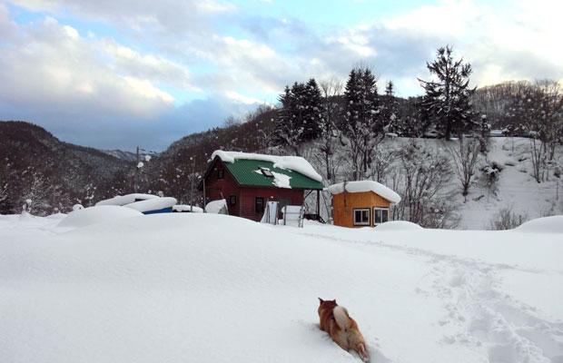 岡林夫妻が住む家。冬には家がすっかり雪に埋もれてしまう。