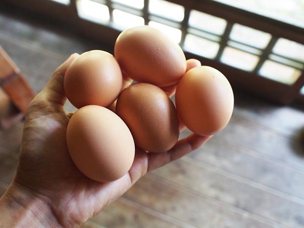 産みたて卵が5つも!