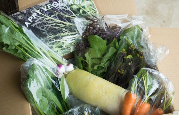 お客様にお届けするように何種類かの野菜をセットにして箱に詰めます。