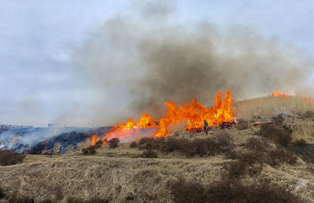 野焼きを行う方は火の手のすぐそばで作業します。