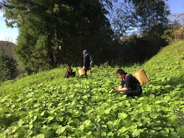 この季節は、ゲストが来るとかごを背負って山菜摘みへよく行きます。