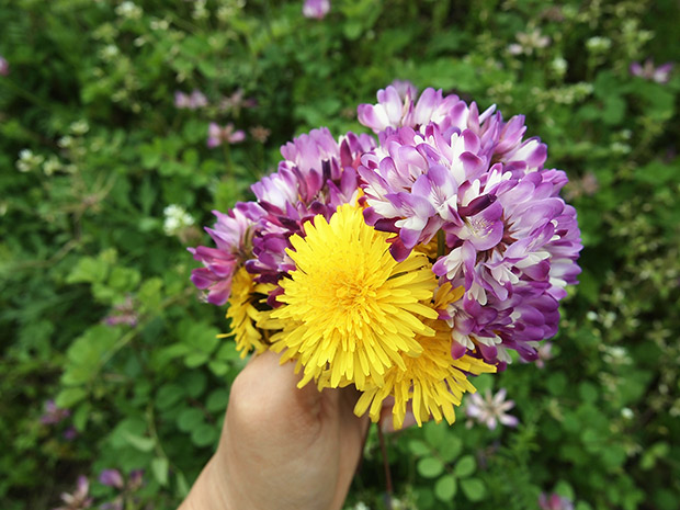 レンゲの花と、タンポポ。