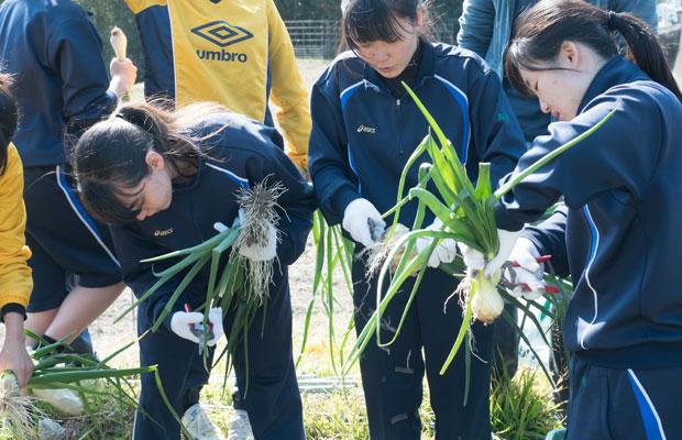 玉ねぎを収穫して根を切る作業も。