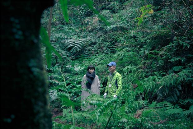 ヘゴの森を散策