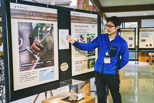 アカコッコは絶滅危惧種に指定されている野鳥。2016年に行われた調査では、島内での生息数を約7800羽と推定した。