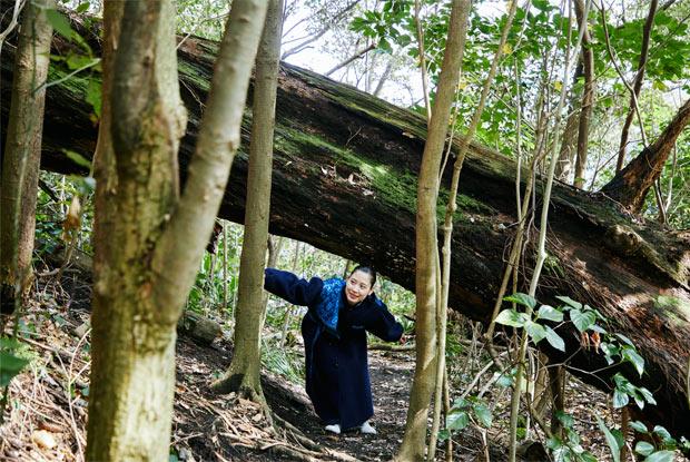 大路池周辺の照葉樹林の森