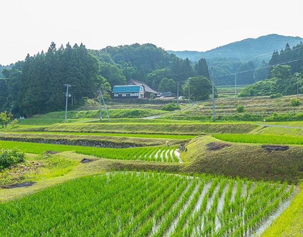 束稲山の麓に佇む平泉倶楽部と、緩やかに続く棚田。