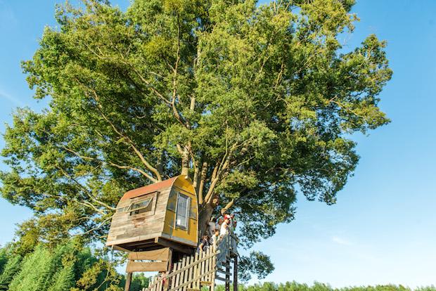 子どもたちに大人気のツリーハウス。