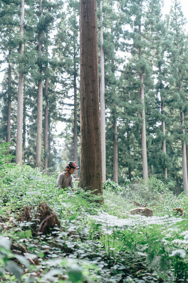 FRAMEに使われているのは、福井県の杉間伐材。間伐とは、木々がお互いの成長を阻害する枝を間引く「木の間引き」のこと。FRAMEの皆さんは森の本来あるべきサイクルを取り戻すために、多くの人たちに木を使ってもらうことが必要だと考えています。