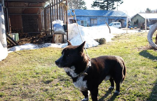 美流渡地区に隣接する奈良町に山岸さんの住まいがある。愛犬がお出迎え。