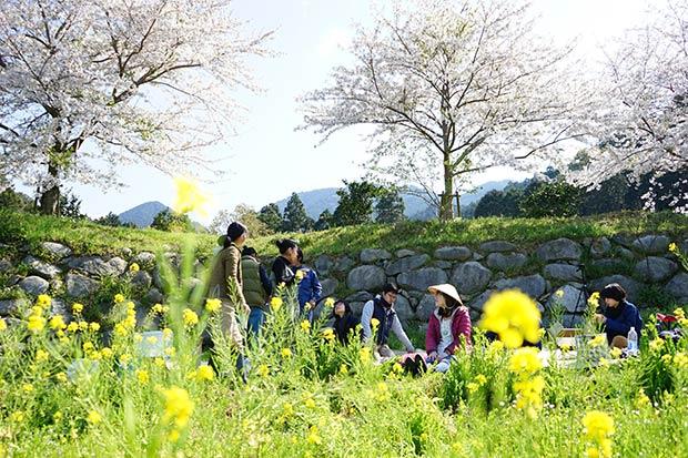 """花見シーズンの糸島には、トタン屋根を吹き飛ばすほどの激しい""""春の嵐""""がやってきます。葉桜にならない前に、なにかにつけてシェアメイトと花見へ。今年はあと何回、この景色が楽しめるかなあ。"""