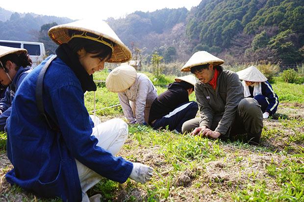 畑には春菊、ほうれん草、じゃがいも、里芋、生姜などを植えています。