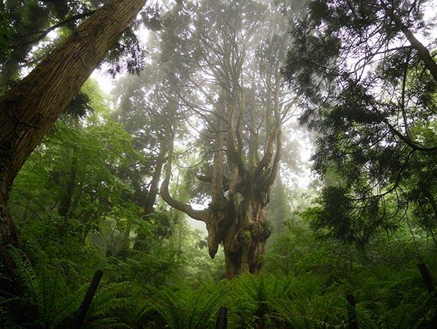 一度訪れてから、ずっと心に残り続けていた御神木「乳房杉」のある集落に住めることに。勝手に乳房杉が私を呼んでくれたような気持ちになりました。