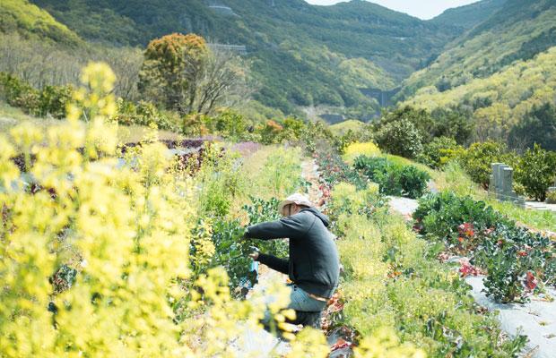 春の畑はトウ立ちして花を咲かせたアブラナ科の野菜たちで花畑のよう。