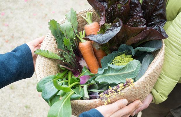 今年に入ってからは、地元の人たちにもっとHOMEMAKERSの野菜を食べてもらいたいなぁといろいろ企画してます。